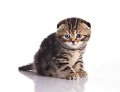 Network calls on the main thread makes kittens sad.