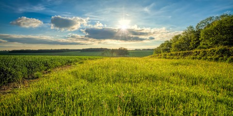 green_pasture