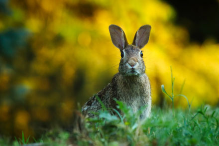 - bunny small - Dynamic Features in Swift | Ray Wenderlich