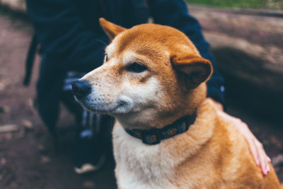 - smiling dog small - Dynamic Features in Swift | Ray Wenderlich