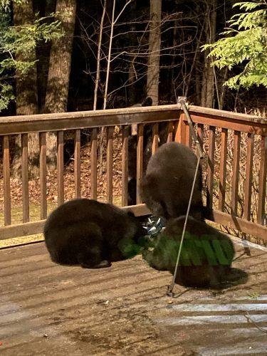 bear cubs destroying bird feeder