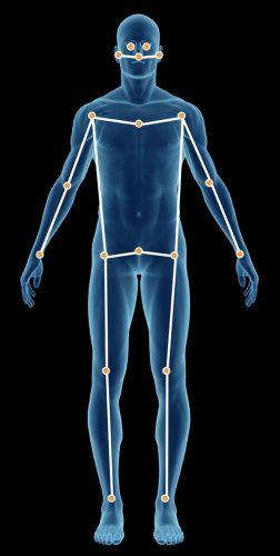 Body landmarks illustration