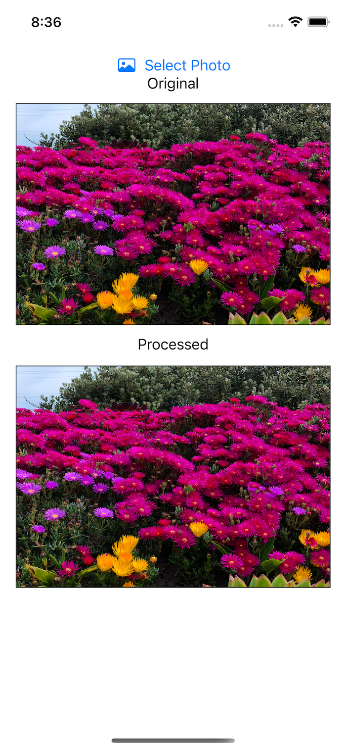 Correctly oriented red flowers
