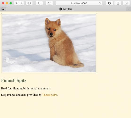 A cute dog on the website