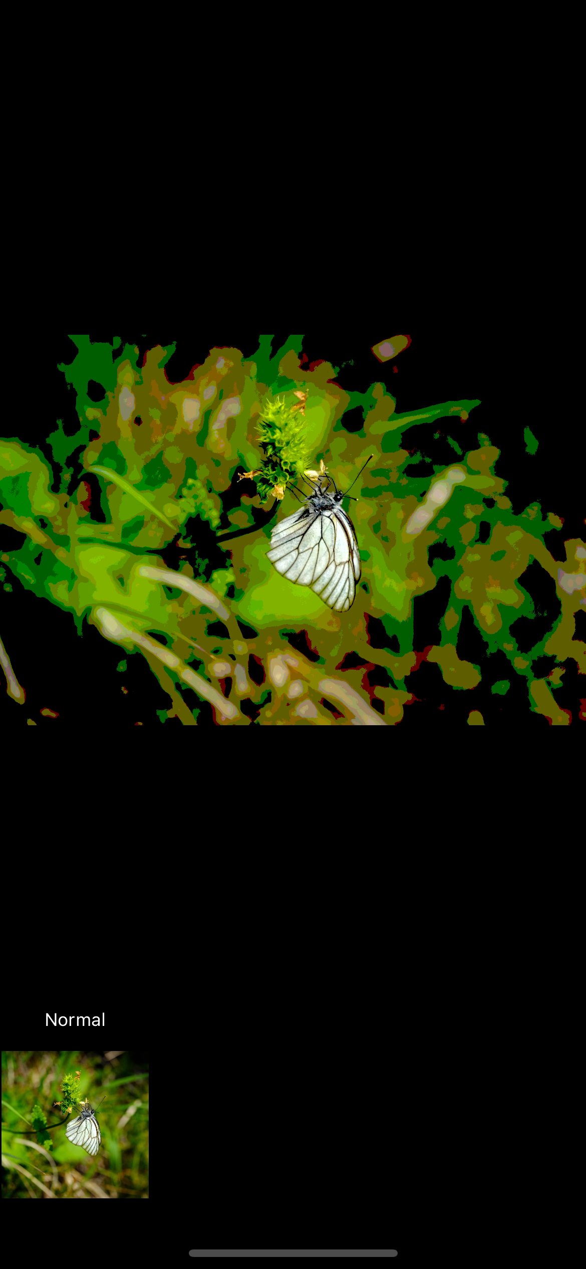 Butterfly with background blurred